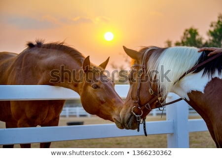 saratoga sunset stock photo © lovleah