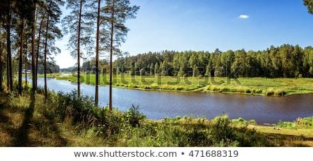 反射 樹皮 森林 水 ツリー ストックフォト © compuinfoto