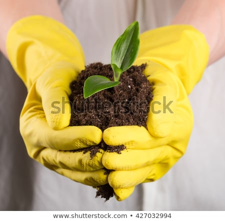hands with gloves and plant stock photo © feelphotoart