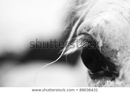 лошади глаза подробность осень время волос Сток-фото © castenoid