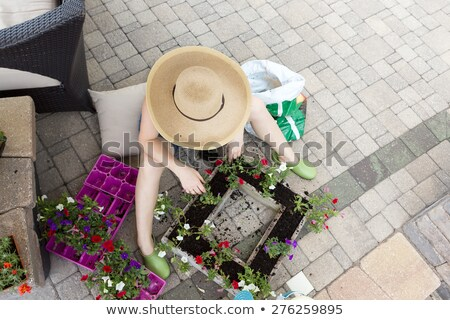 woman potting plants on a hot spring day stock photo © ozgur