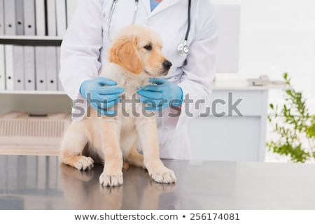 Veterinário labrador branco mulher feliz médico Foto stock © wavebreak_media