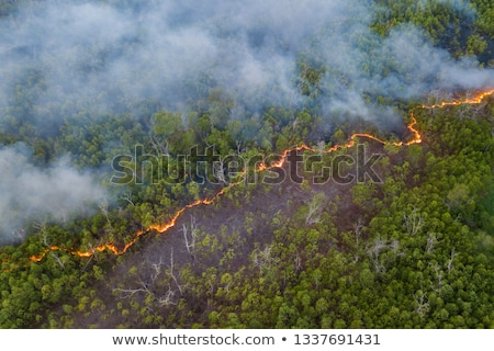 Yangın yaprakları çalı çim yanan Stok fotoğraf © marcrossmann
