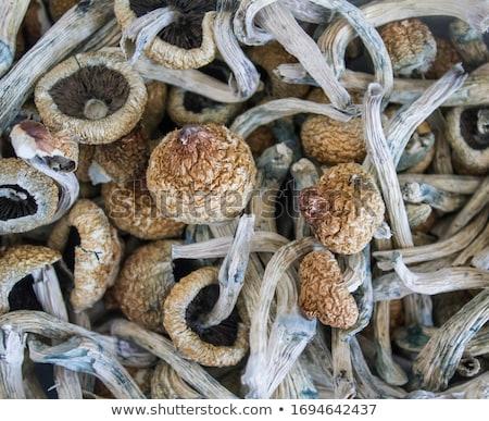 Stock fotó: Aszalt · gombák · fából · készült · tál · zöldség
