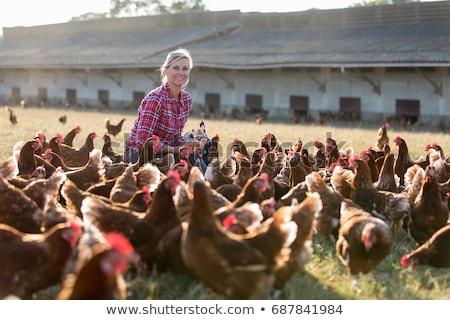 Landbouwer boerderij illustratie werk natuur landschap Stockfoto © colematt