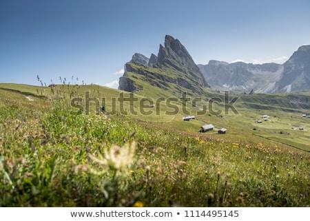 Montagnes vallée herbe verte arbres coup nuages Photo stock © frimufilms