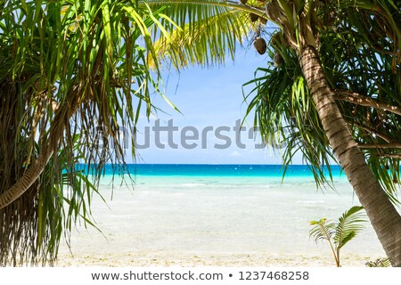 Foto d'archivio: Tropical Beach With Cocopalms In French Polynesia
