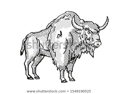 Antigo bisão extinto norte americano animais selvagens Foto stock © patrimonio