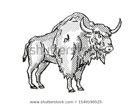 Ancient Bison Extinct  North American Wildlife Cartoon Drawing Stock photo © patrimonio