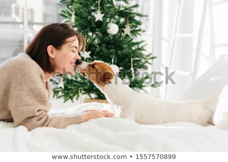 Lovely woman and dog have sweet kiss, feel love to each other, lie on bed against fir tree decorated Stock photo © vkstudio
