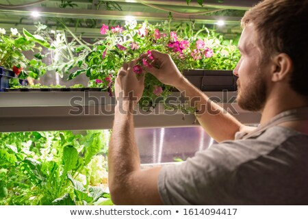 Young male farmer or selectionist in workwear taking sample of petunia flower Stock photo © pressmaster