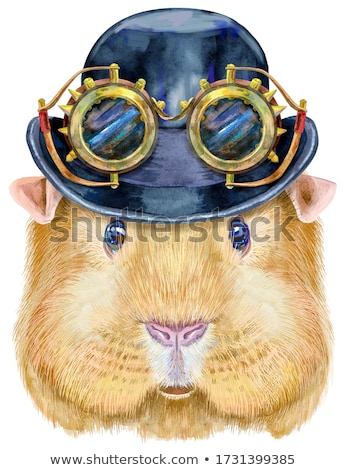 Watercolor portrait of Self guinea pig with hat bowler and steampunk glasses on white background Stock photo © Natalia_1947