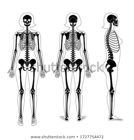 mulher · corpo · osso · esqueleto · de · volta · nu - foto stock © Pixelchaos