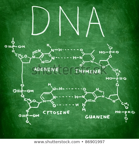 химического · модель · ДНК · структуры · белый · науки - Сток-фото © shawnhempel