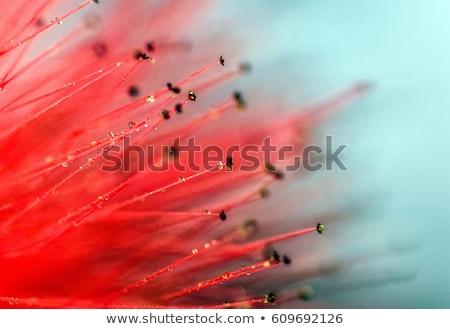 perene · prímula · primavera · jardim · flores · belo - foto stock © photocreo