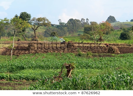 Agricultural Scenery Near Rwenzori Mountains Photo stock © PRILL