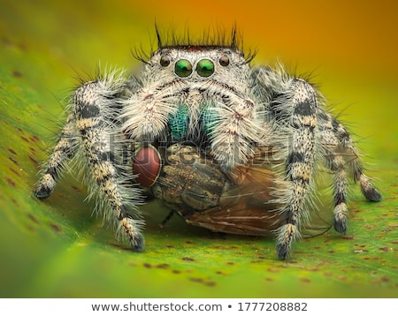 Foto stock: Jumping Spider In Garden Or In Green Nature It