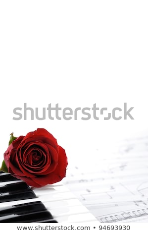 Single music rose Stock photo © REDPIXEL