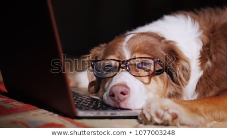 Tired or overworked dog sleeping at computer laptop Stock photo © lovleah