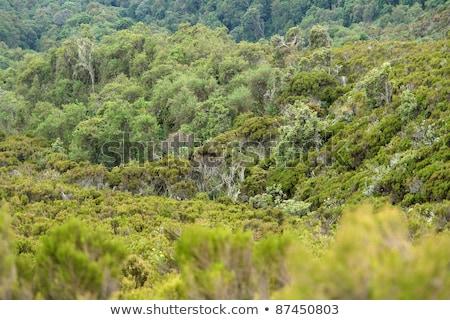 vegetation around Mount Muhabura Stock photo © prill