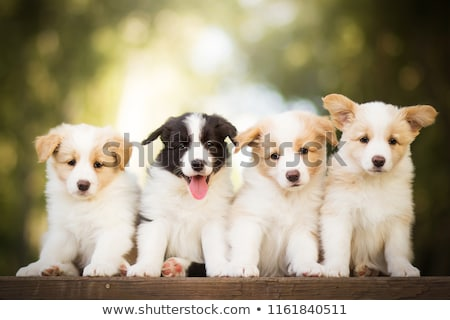 four amazed puppy dogs stock photo © feedough
