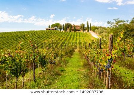 manzara · etrafında · Toskana · İtalya · orman · doğa - stok fotoğraf © prill