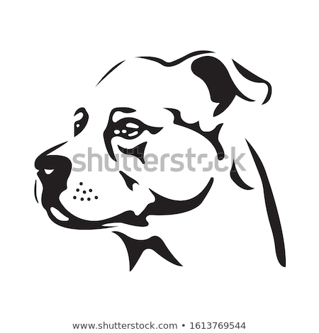 half head of a black labrador retriever dog stock photo © eriklam