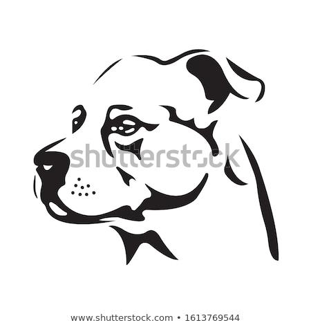 ストックフォト: Half Head Of A Black Labrador Retriever Dog