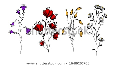 spring meadow with poppy and chamomile flowers stock photo © goce