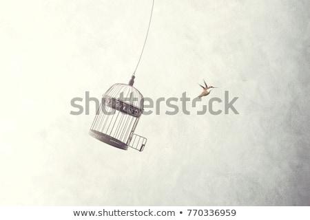 Madárkalitka sziluett fekete otthon rajz belsőépítészet Stock fotó © mintymilk