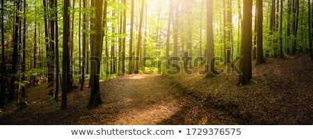Ağaçlar yaz orman parlak güneş çim Stok fotoğraf © almir1968