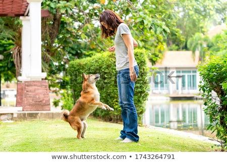 Cães saudação jovem Boston terrier dois Foto stock © ArenaCreative