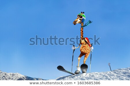Giraffe Skier Stock photo © derocz