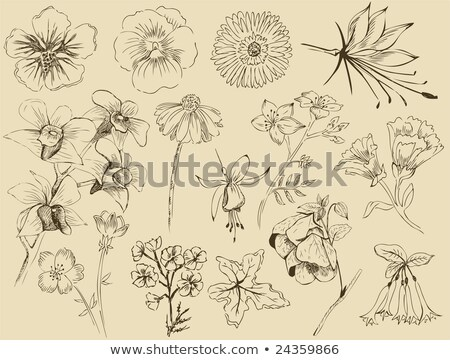 retro flowers set 1 stock photo © mintymilk