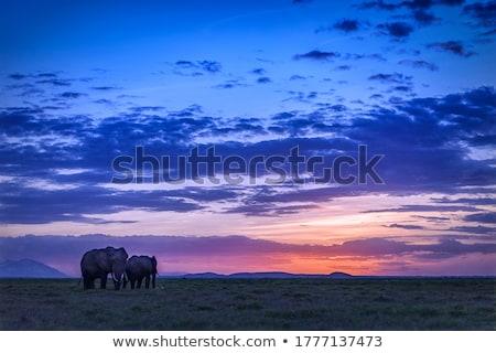группа · слон · ходьбе · Серенгети · тело · зеленый - Сток-фото © ajn