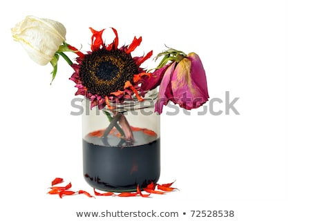 dirty rotten flowers Stock photo © jayfish