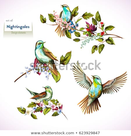 Foto stock: Decorativo · vetor · pássaro · floral · fundo