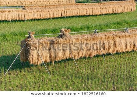 aratás · idő · dolgozik · búzamező · égbolt · étel - stock fotó © varts