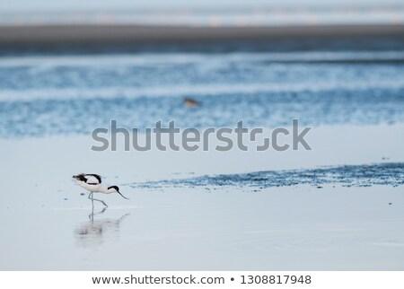 ナミビア · 鳥 · アフリカ · 水 · 家族 · 海 - ストックフォト © imagex