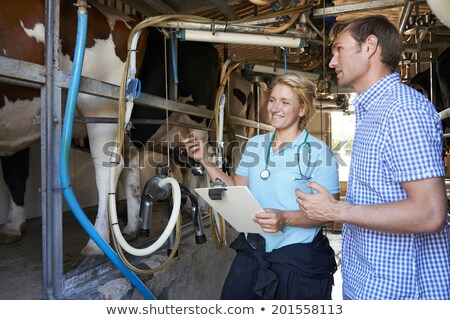 Farmer And Vet Inspecting Dairy Cattle In Milking Parlour Stock photo © HighwayStarz