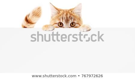 猫 · バナー · 足 · 笑顔 · 青 · 面白い - ストックフォト © lightsource