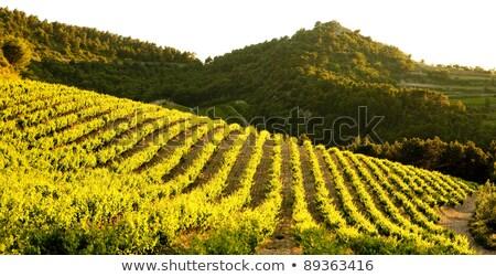 vineyards near Gigondas, Provence, France stock photo © phbcz