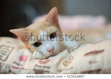 シャム猫 眠い ベッド 在庫 写真 猫 ストックフォト © nalinratphi