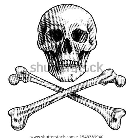 imagem · crânio · terrível · isolado · branco · linha - foto stock © polygraphus