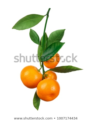 Mandarin branch Stock photo © mroz