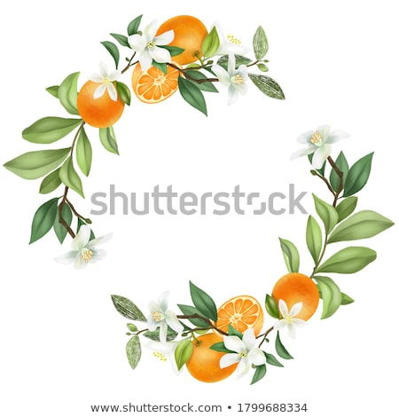 decoratief · vruchten · frame · abstract · natuur · blad - stockfoto © elenapro