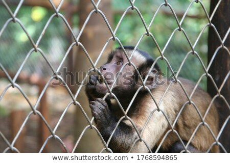 Stock photo: captive