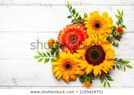 Najaar bloemen hout foto laat tijd Stockfoto © Dermot68