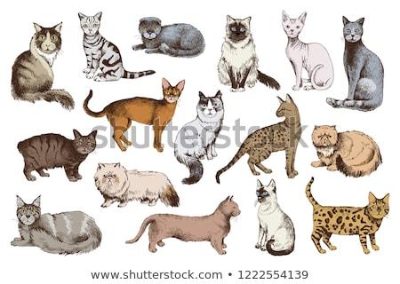 кошки · лице · фон · Живопись - Сток-фото © ValeriyIrkitov