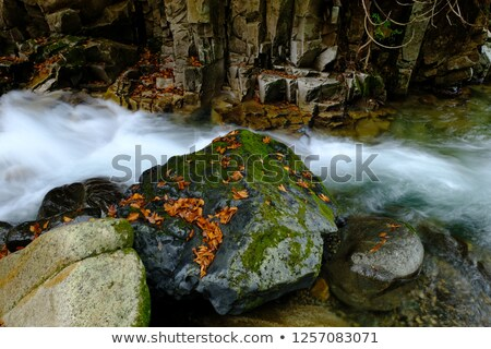 Wet Small Rocks and Fallen Leaves for Backgrounds Stock photo © ozgur